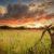 Karongwe Reserve landscape 1_1920x1920